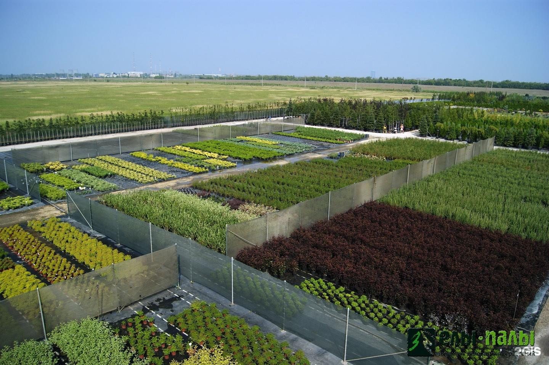 Выращивание дорогих растений как бизнес 28