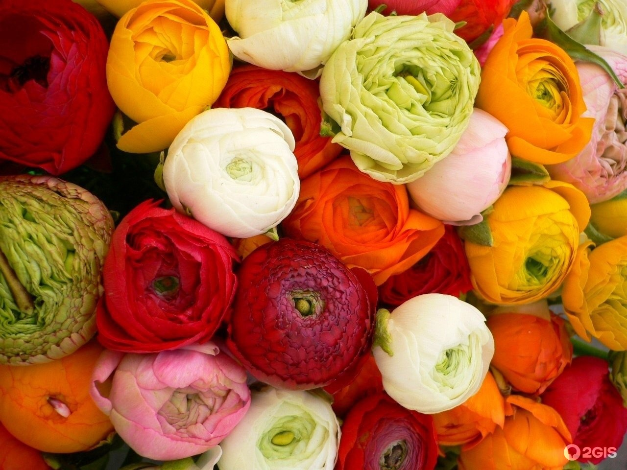 Цветы похожие на лютики фото