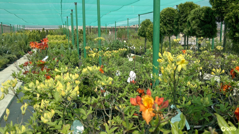 Букет, совхоз цветы башкирии прайс-лист