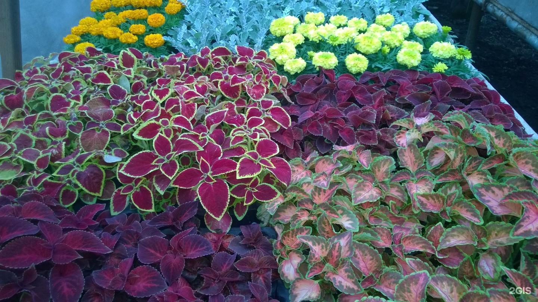 Совхоз цветы башкирии прайс-лист