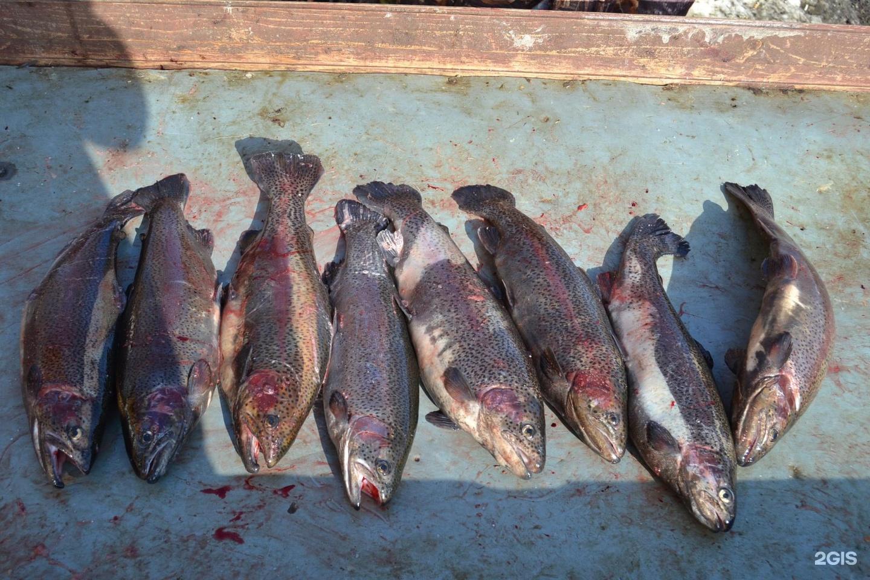 Рыболовная базе Лагуна