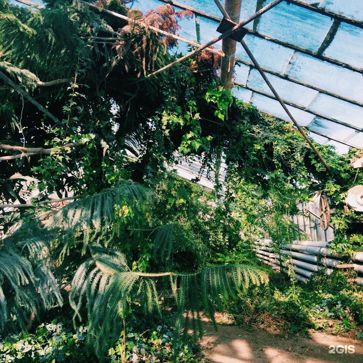 Цветов долгопрудном, волгоградский ботанический сад букет