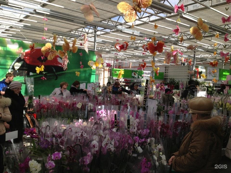 Ставрополь магазин цветов планета лета каталог, день