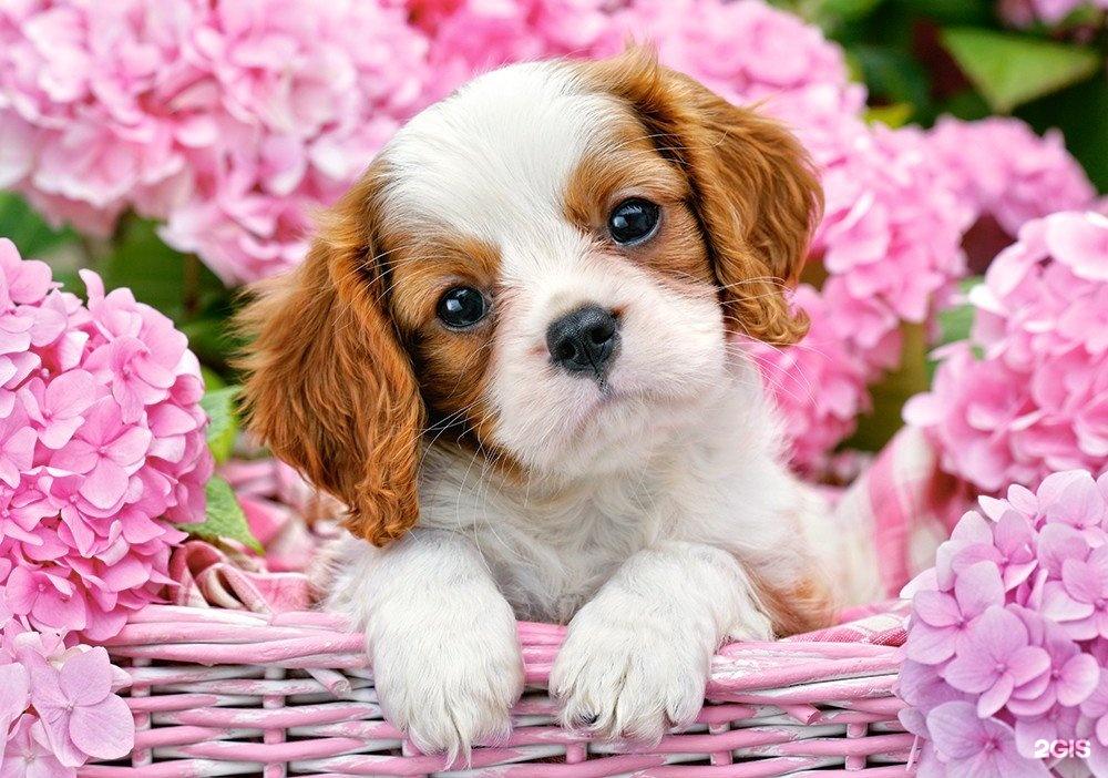 Открытки с породами собак