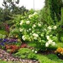 Гармония сада, студия ландшафтного дизайна